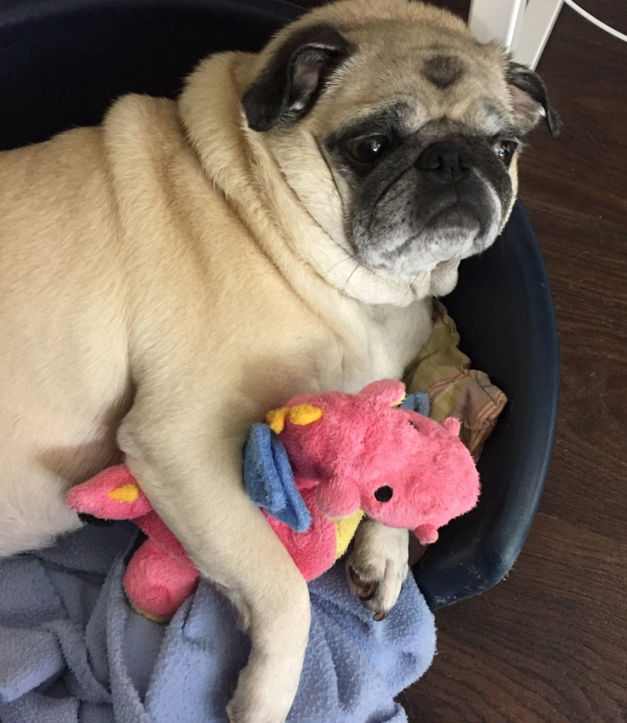 What I'm loving lately Cute pug with teddy bear