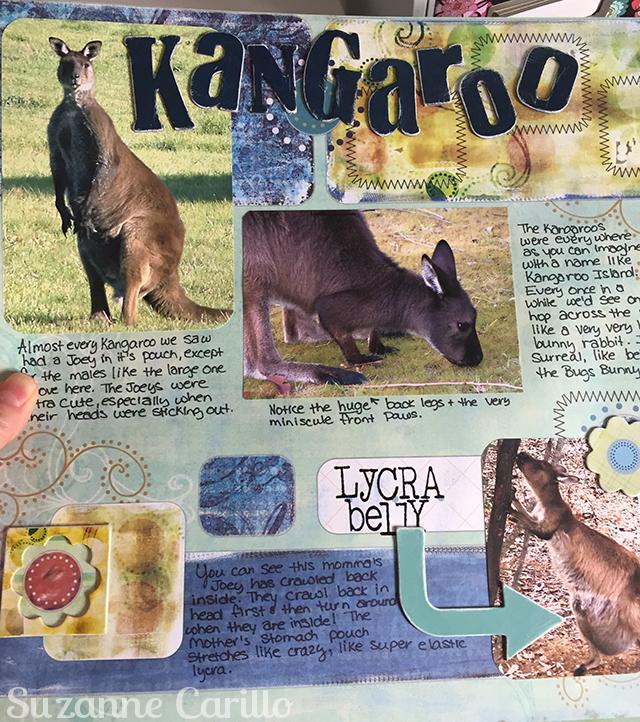 kangaroos kangaroo island 2006 suzanne carillo