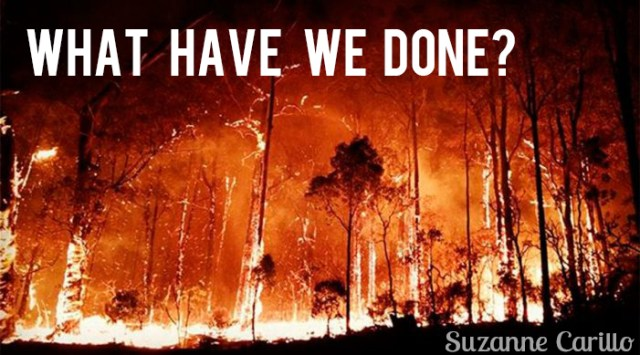 what have we done? environmental emergency wild fires burning in australia
