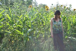 In a field of sunflowers
