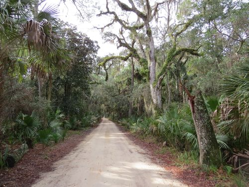 Florida jungle