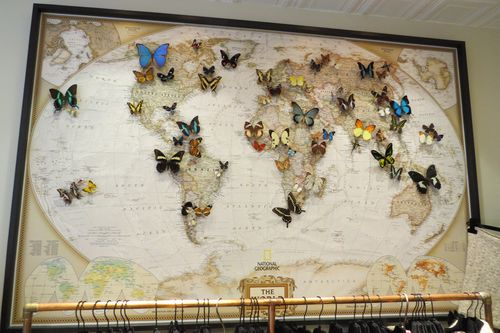 Butterfly shop display amsterdam