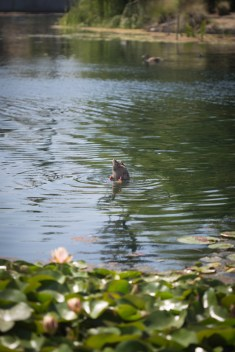 Duck dive