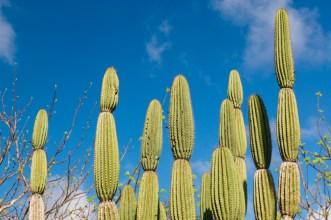Cactus Plant on San Cristobal Island