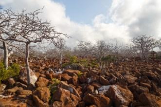 Rocky Landscape on Seymour Island