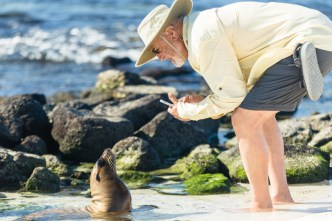 Curious Sea Lion Pup With Visitor on Mosquera Island