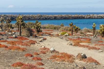 South Plaza Island Landscape