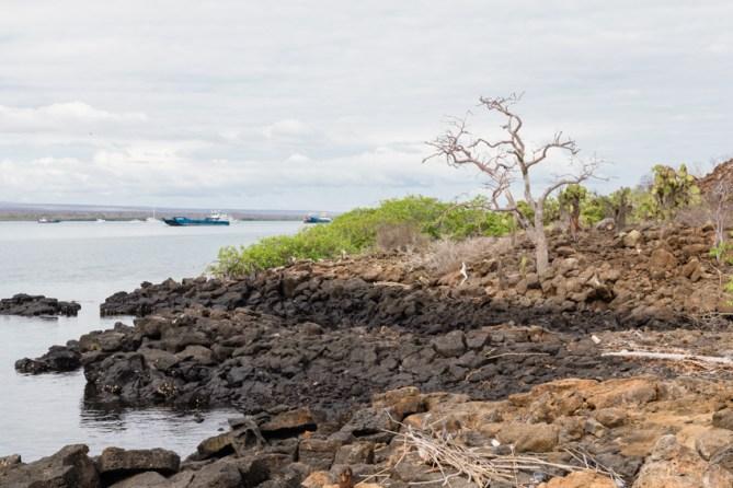 Rocky Coast of Baltra Island