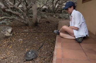 Tortoise breeding center on San Cristobal Island Ecuador