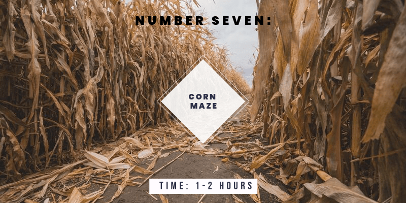Things to do in Colorado in the Fall: Get lost in a corn maze