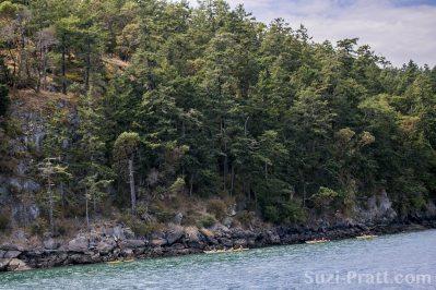 Puget Sound scenery San Juan Islands-03 Kayakers