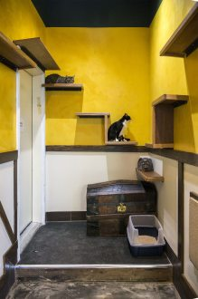 Seattle Meowtropolitan cat cafe