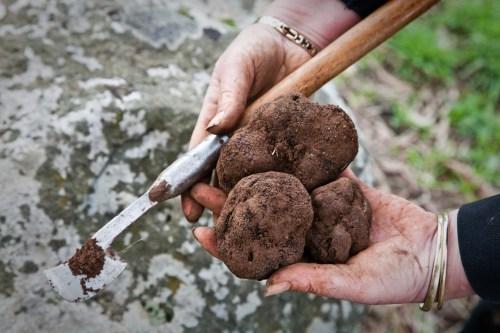 BCT - truffles1 (1)