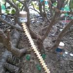 Fairy Garden From Recyclables Suzy Homeschooler