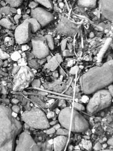 black ant maine_Snapseed
