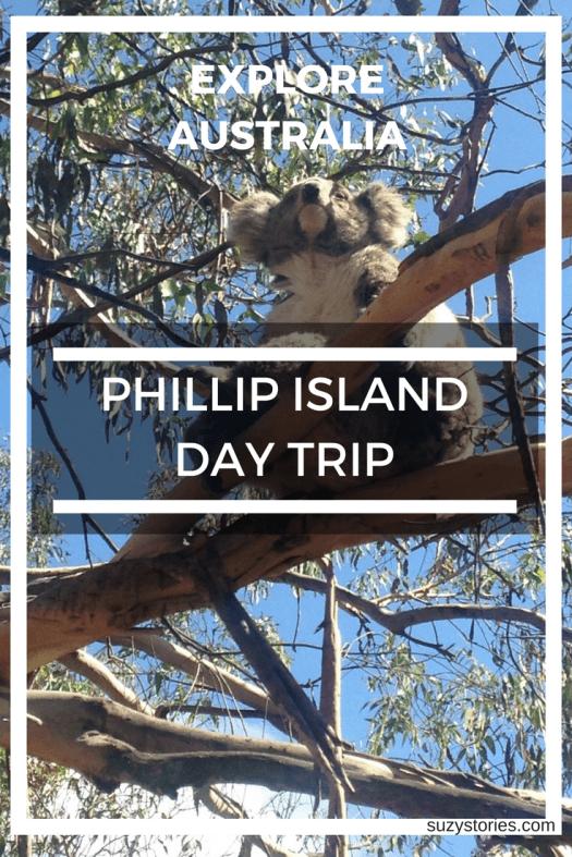 Text overlay image of koala sitting in a tree on Phillip Island