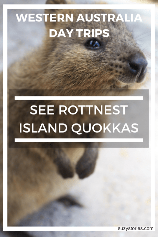 Text overlay image of a smiling quokka