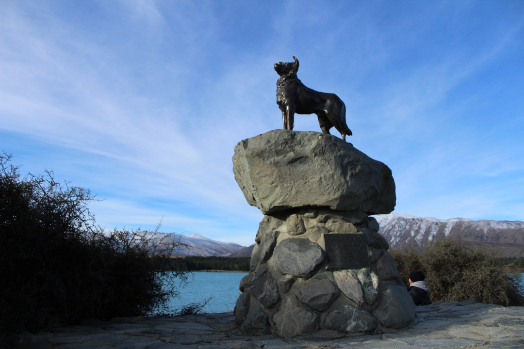 Bronze Sheepdog - things to do in Lake Tekapo, New Zealand road trip
