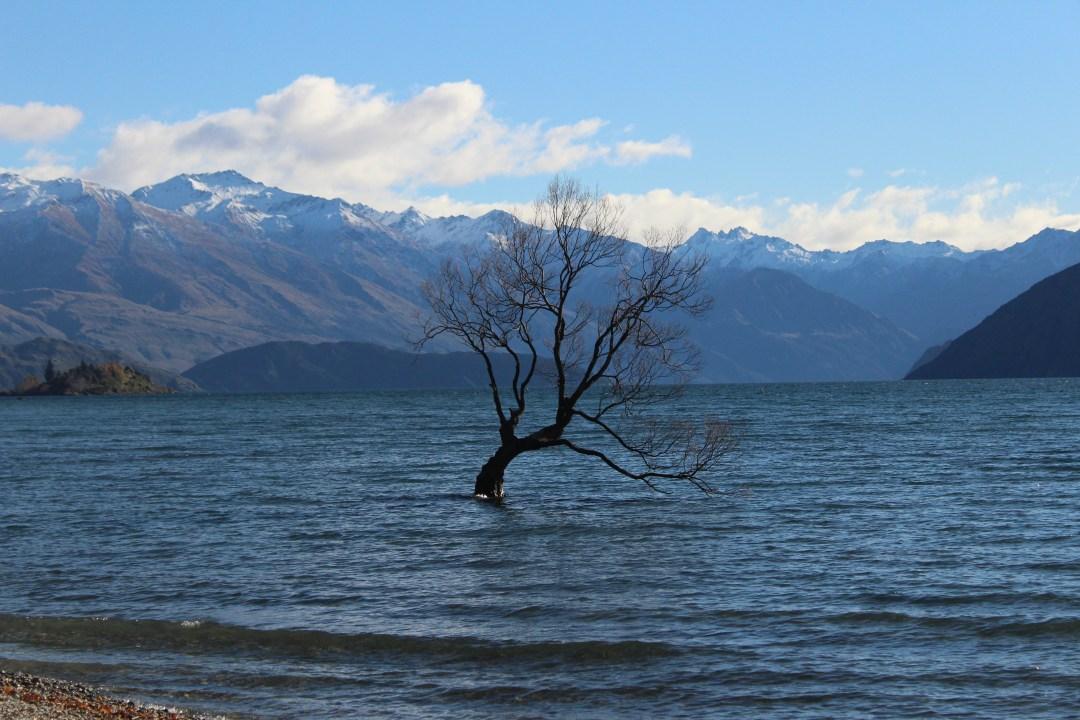 That Wanaka Tree - Things to do in Wanaka New Zealand