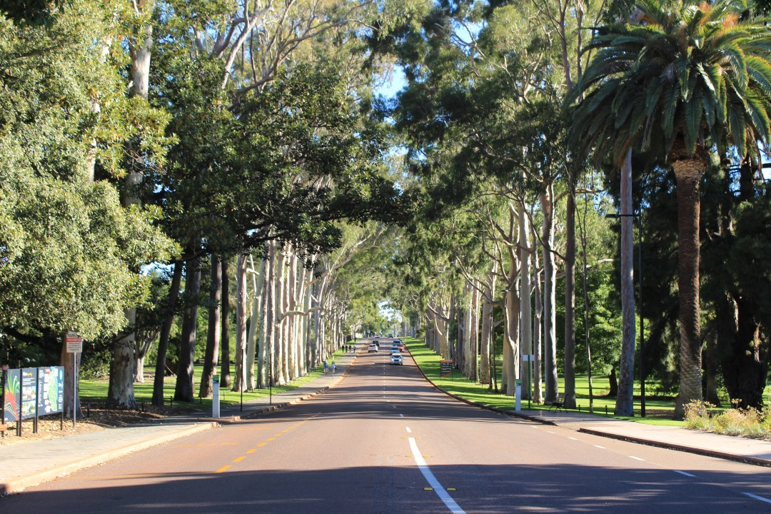 Best things to do in Perth - one day itinerary. Visit King's Park
