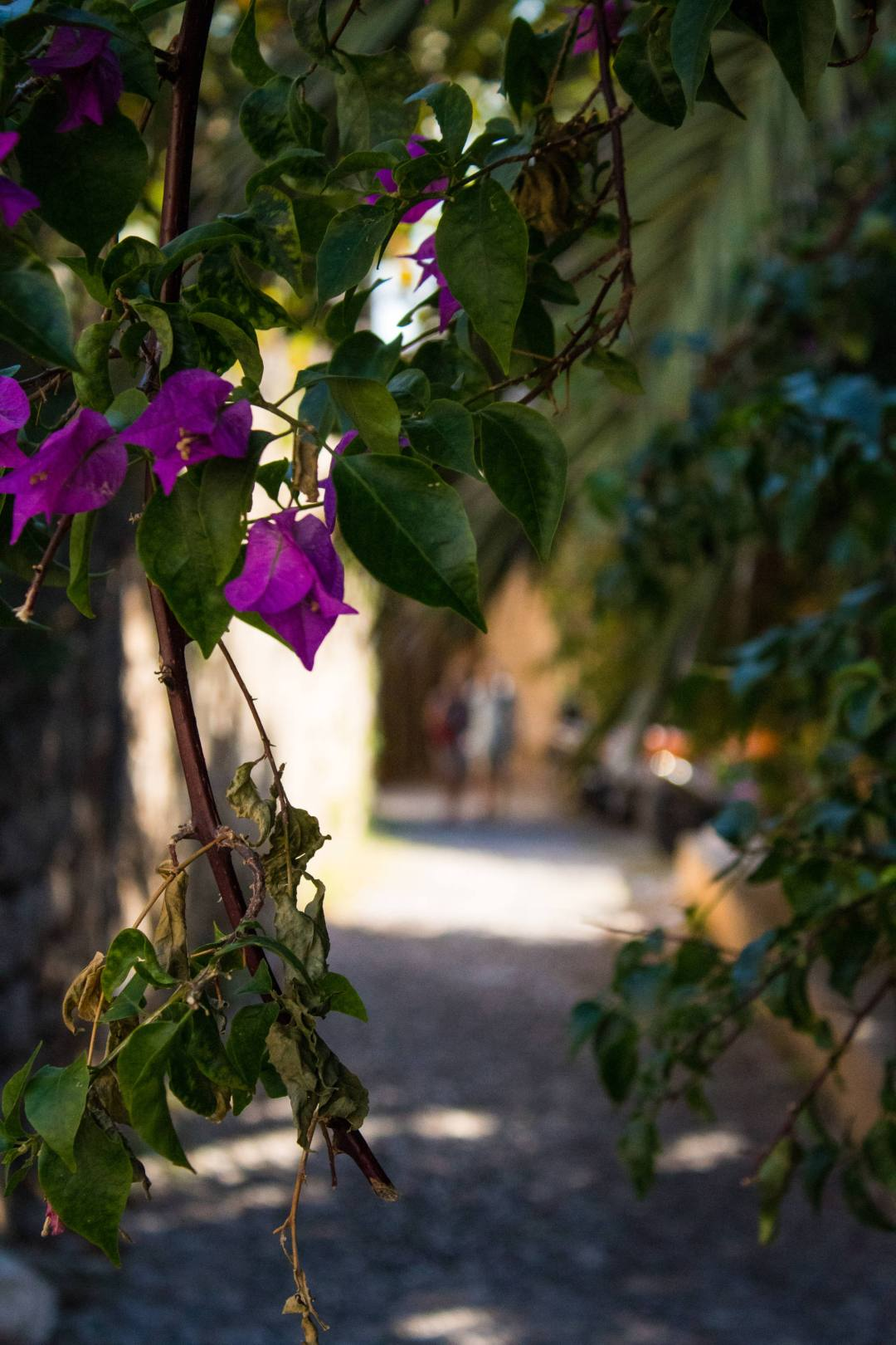 Flower in street of Rhodes