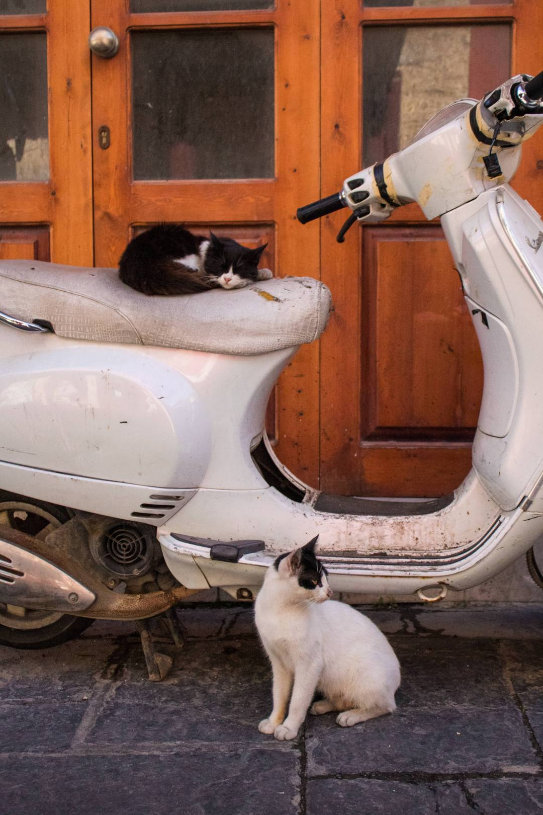 Cats sitting on moped in Rhodes