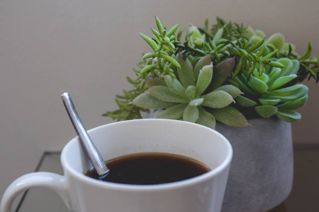 coffee in white mug next to plant