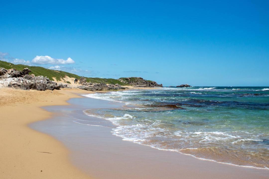 beach walk on penguin island
