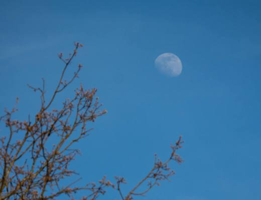 moon rising behind tree branch