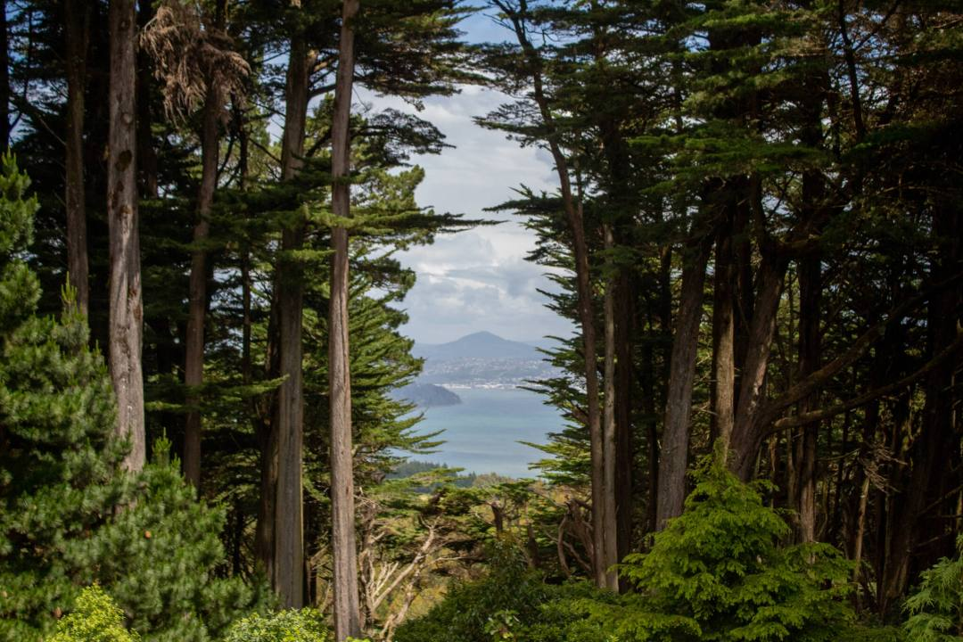 view of coastline through tall trees from larnach castle in dunedin