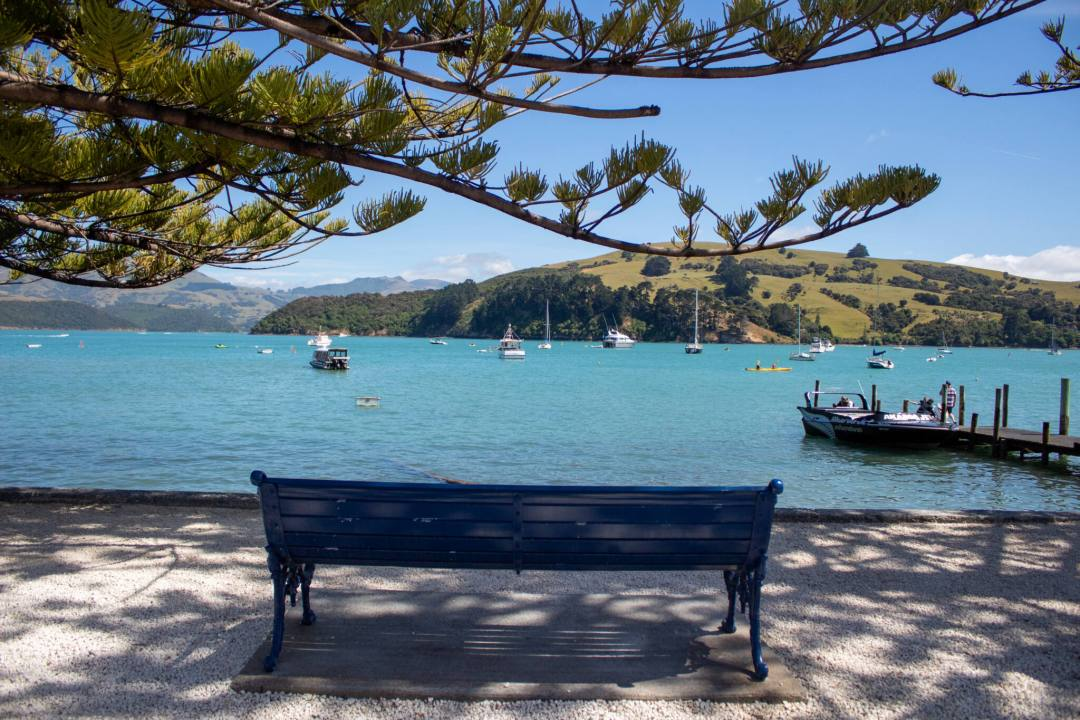 A blue bench beneath a tree overlooking Akaroa Harbour
