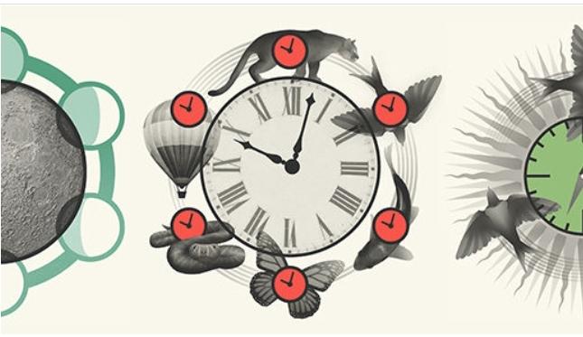 Šta su to satovi?