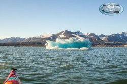 (C)Icebearsandislands-9099