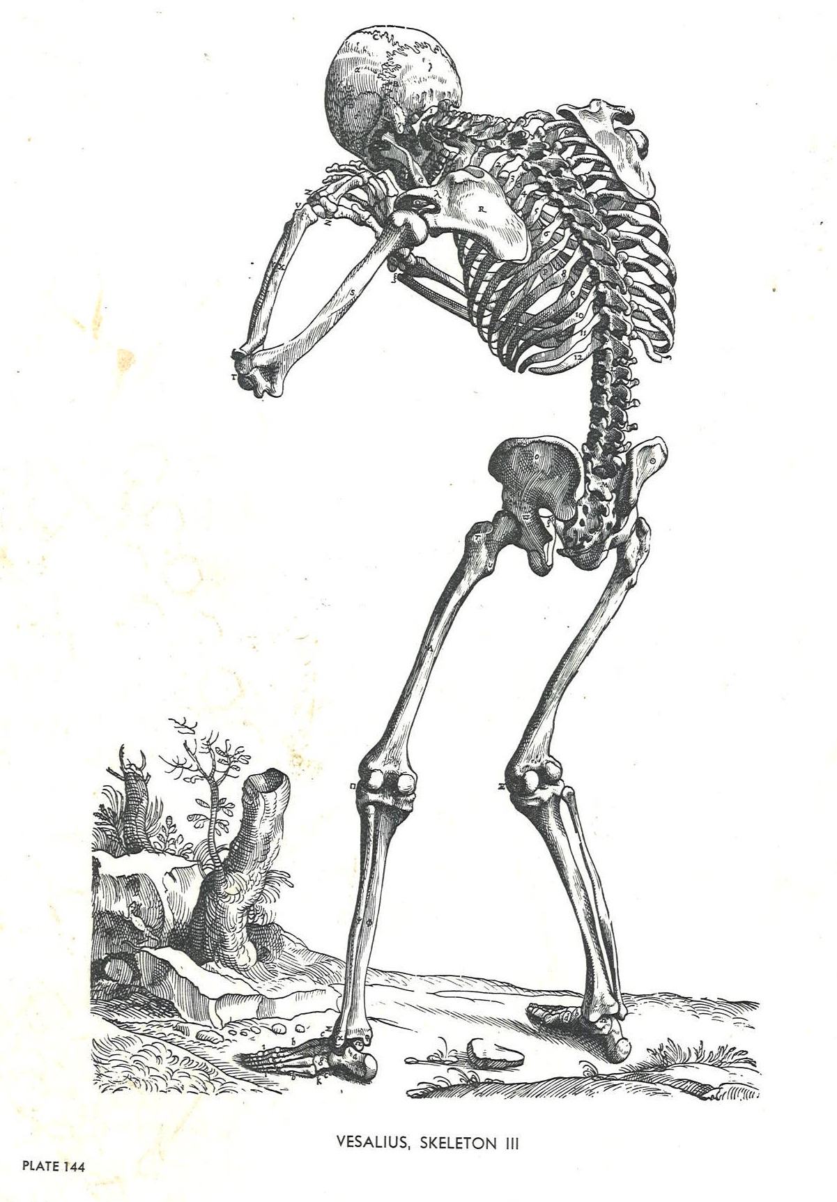 Sk Sk Sk Skeletons