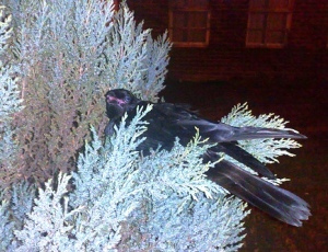 The beautiful bird I encountered on my way home!