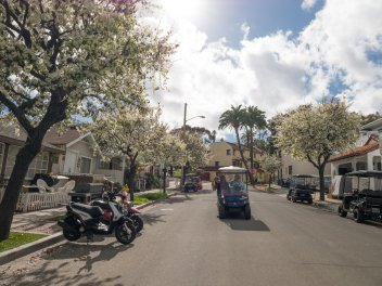 Gorgeous streets of Avalon