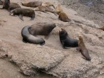 Sea Lions at Ranger Station 1