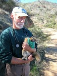 Catalina Island Fox with Naturalists 3