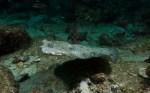 Coco Underwater-115