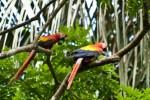 Costa Rica-138