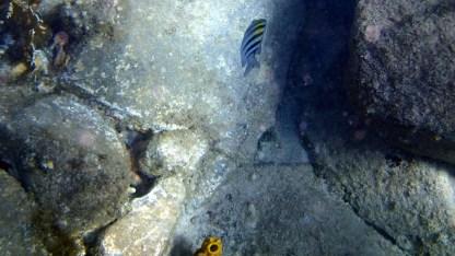 Fish at the Caves