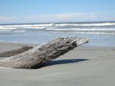LS_20130505_154318 driftwood on the beach