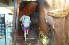 Kauri Entrance -Tree trunk made into a stairway.