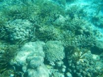 reef near Bitter End