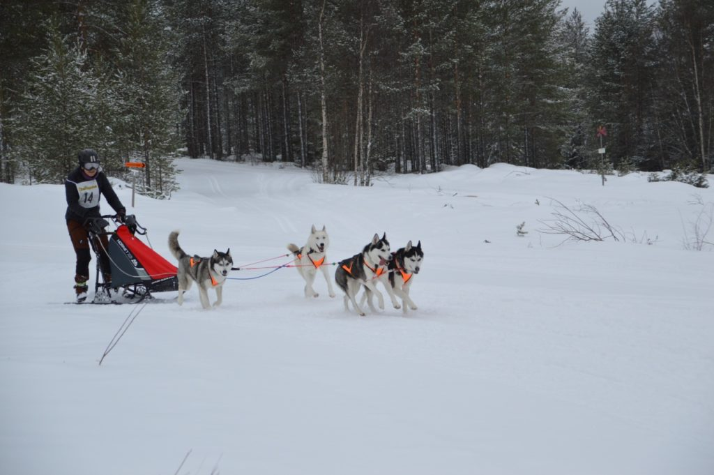 Ett bra förberedande VM var Nordic Open på delvis tunga banor på grund av snöfallet. Foto: Leif Eriksson
