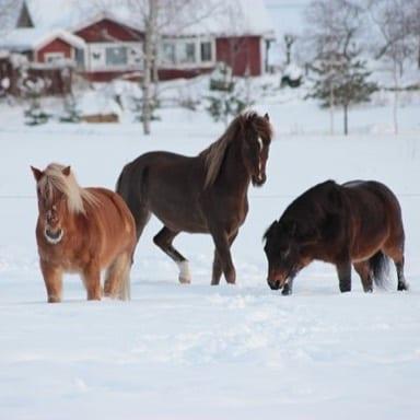 Fantastiskt fina vinterbilder lggs upp p SHs Facebook Denna rhellip