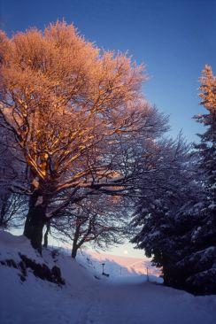Schauinsland im Schwarzwald 1990