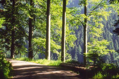 Schwarzwald 1993