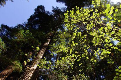 2005-californien-002