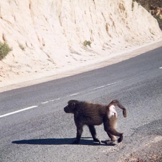 1973-suedafrika-namibia-012
